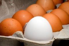 Carton of fresh farm eggs Royalty Free Stock Photo