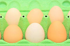Carton of organic eggs Stock Image