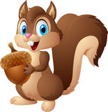Carton squirrel holding acorn. Illustration Royalty Free Stock Photography
