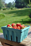 Carton of Strawberries Royalty Free Stock Image