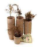 Carton vase, root and money Royalty Free Stock Photo