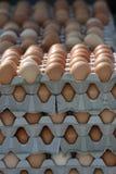 Cartons Of Eggs Royalty Free Stock Photos