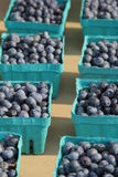 Cartons of fresh picked blueberries Royalty Free Stock Photos