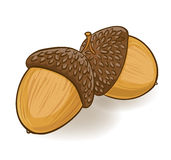 Cartoon acorns Stock Photos
