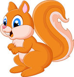 Cartoon adorable squirrel Stock Photos