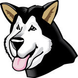 Cartoon alaskan malamute. A cartoonish portrait of an alaskan malamute dog Stock Image