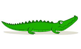 Cartoon Alligator. Cute cartoon alligator on isolated white background, vector illustration Stock Image