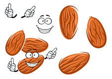 Cartoon  almond seed character Royalty Free Stock Photo