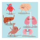 Cartoon anatomy, human organs. Vector  set Stock Images