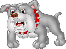 Cartoon angry bulldog isolated on white background Stock Images