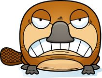 Cartoon Angry Platypus. A cartoon illustration of a little platypus with an angry expression stock illustration