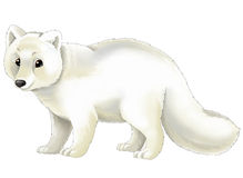Cartoon animal - arctic fox Stock Images