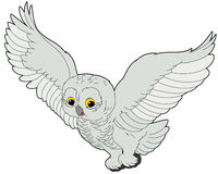 Cartoon animal - arctic owl - flat coloring style Stock Photos