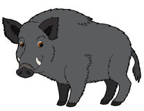 Cartoon animal - boar - illustration for the children Stock Image