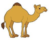 Cartoon animal - camel Royalty Free Stock Photo