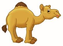 Cartoon animal - camel - caricature Stock Image