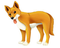 Cartoon animal dingo dog Royalty Free Stock Image