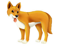 Cartoon animal dingo dog Stock Photo