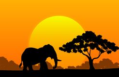 Cartoon animal elephant in the africa Royalty Free Stock Image