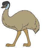 Cartoon animal - emu - illustration for the children vector illustration