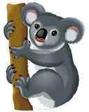 Cartoon animal - koala bear Royalty Free Stock Photography