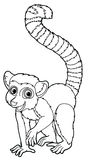 Cartoon animal - lemur - caricature Royalty Free Stock Photo