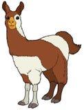 Cartoon animal - llama - flat coloring style Stock Image