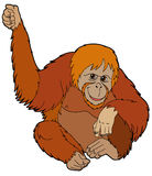 Cartoon animal - orangutan - illustration for the children royalty free illustration
