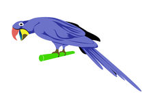 Cartoon animal ,Parrot Royalty Free Stock Images