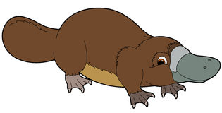 Cartoon animal - platypus - illustration for the children. Beautiful cartoon animal illustration for the children Stock Image
