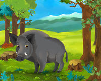 Cartoon animal scene - boar Stock Photography