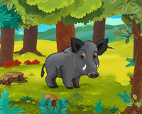 Cartoon animal scene - caricature - boar Royalty Free Stock Images