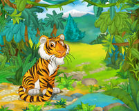 Cartoon animal scene - caricature - tiger Royalty Free Stock Image