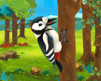 Cartoon animal scene - woodpecker Stock Photography