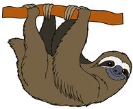 Cartoon animal - sloth - flat coloring style Stock Photo