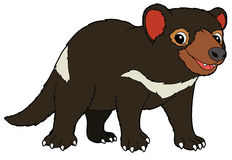 Cartoon animal - tasmanian devil -  illustration for the children Royalty Free Stock Images