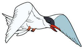 Cartoon animal - tern - flat coloring style Stock Images