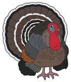 Cartoon animal - turkey Stock Images
