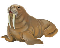 Cartoon animal - walrus Stock Image