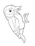 Cartoon animal - woodpecker - coloring page Stock Photo