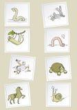 Cartoon animals. Fast and slow funny animals vector cartoon set Stock Photography
