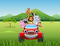 Cartoon animals africa in the red car Royalty Free Stock Image