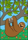 Cartoon animals. Cute lazy sloth hangs on the tree branch. And smiles royalty free illustration