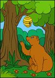Cartoon animals for kids. Cute brown bear looks at the beehive. Royalty Free Stock Photos