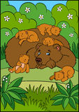 Cartoon animals for kids. Daddy bear. With his sleeping little cute baby bears in the forest Stock Image