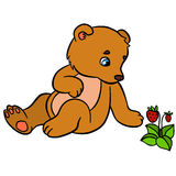 Cartoon animals for kids. Little cute baby bear. Sits and looks at the strawberry Stock Images