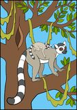 Cartoon animals for kids. Mother lemur stands on the tree branch with her little cute baby. Cartoon animals for kids. Mother lemur stands on the tree branch Royalty Free Stock Image