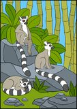 Cartoon animals for kids. Three little cute lemurs. Cartoon animals for kids. Three little cute lemurs on the stones Royalty Free Stock Photos