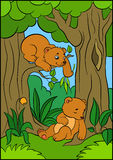 Cartoon animals for kids. Two little cute baby bears. Cartoon animals for kids. Two little cute baby bears in the forest Stock Photography