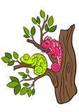 Cartoon animals for kids. Two little cute chameleons. Stock Photo